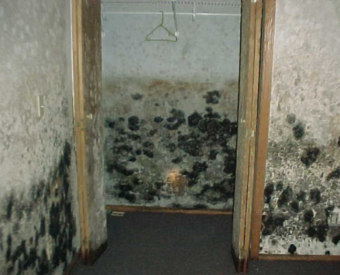 mold cleanup service toronot