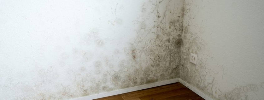 mold cleanup Toronto