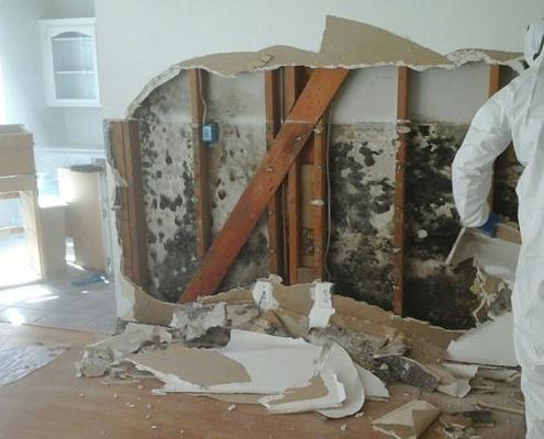 mold removal company Toronto