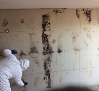 Mold Cleanup service for Toronto residents